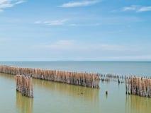 bambusa ogrodzenia rząd Obrazy Royalty Free