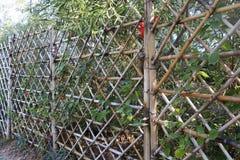 Bambusa ogrodzenie Obrazy Royalty Free