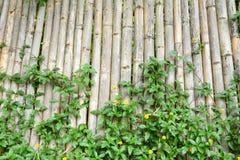 bambusa ogrodzenie Fotografia Stock