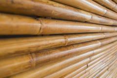 bambusa ogrodzenie Zdjęcie Stock