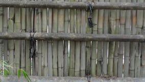 bambusa ogrodzenie zdjęcie wideo