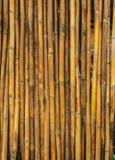 bambusa ogrodzenie Obraz Stock