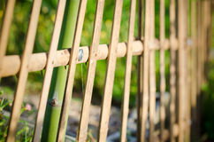 Bambusa ogrodzenie w ogródzie zdjęcie royalty free