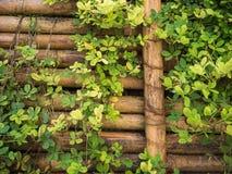 Bambusa ogrodzenie z dużo rośliny Fotografia Stock