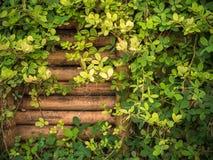 Bambusa ogrodzenie z dużo rośliny Zdjęcie Stock