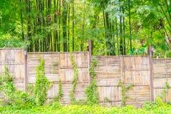 Bambusa ogrodzenie z zielonymi liśćmi Fotografia Stock