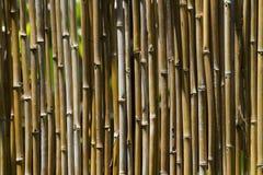 Bambusa płotowy tło Obrazy Stock