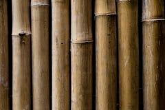 Bambusa płotowy tło zdjęcie royalty free