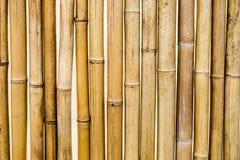 Bambusa segmentu suchy żółty wzór Zdjęcia Stock