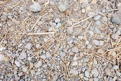 Bambusa, skały tekstura/ Zdjęcia Royalty Free