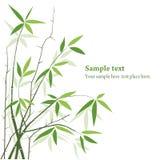 bambusa wektor Obraz Royalty Free
