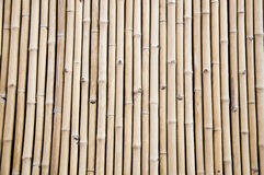 Bambusa wzór Fotografia Stock