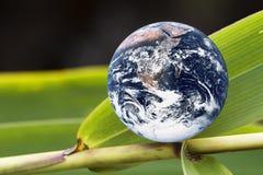 bambusa ziemi zieleni liść planeta Fotografia Royalty Free