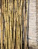 Bambusanlage Stockfoto