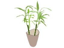 Bambusanlage im Potenziometer Lizenzfreies Stockbild