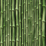 Bambusanlagen Stockfotografie