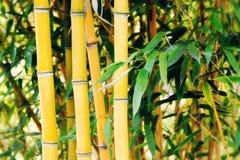 Bambusanlagen Stockfotos