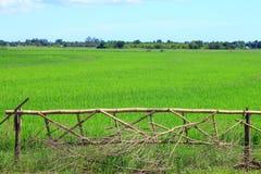 Bambusaufteilung Stockfotografie