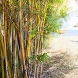 Bambusbäume auf Meer, Strandhintergrund Kopieren Sie Platz stockbilder