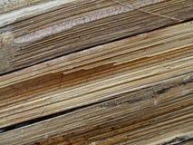Bambusbarke Lizenzfreies Stockbild
