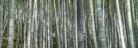 Bambusbaum Lizenzfreie Stockfotos