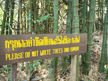 Bambusbaum mit Zeichnung und Schreiben Lizenzfreies Stockfoto