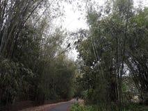 Bambusbaum und schmale Straße Ehrf?rchtiges Bild stockbild