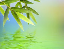 Bambusblätter über abstraktem Hintergrund Stockbild