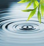 Bambusblätter über Wasser Stockfotografie