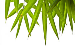 Bambusblätter Stockfoto