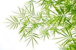 Bambusblätter Lizenzfreies Stockfoto