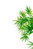 Bambusblätter auf einem weißen Hintergrund Stockfotos