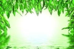 Bambusblätter mit Wasserreflexion stockfotos