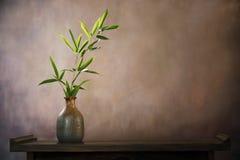 Bambusblatt im Vase Stockbild