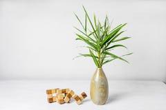 Bambusblatt im Vase Stockfoto