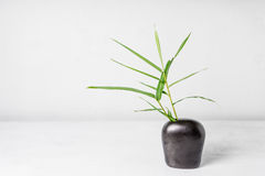 Bambusblatt im Vase Lizenzfreies Stockbild