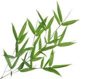Bambusblätter Lizenzfreie Stockfotos