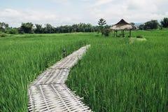 Bambusbrücke Lizenzfreie Stockfotografie