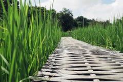 Bambusbrücke, grünes Feld Lizenzfreies Stockbild