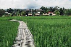 Bambusbrücke, grünes Feld Stockfoto