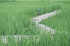 Bambusbrücke, grünes Feld Stockbilder