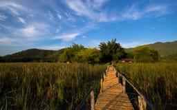 Bambusbrücke mit nettem Himmel Stockbilder
