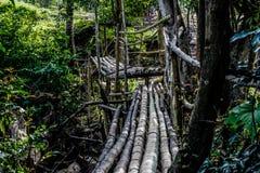 Bambusbrücke in Thailand Stockbild