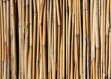 bambuset Royaltyfri Bild