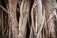 Bambusflöte auf Banyanbaum Lizenzfreies Stockbild