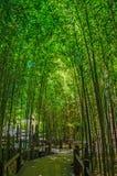 Bambusgarten Stockfoto