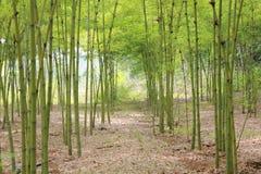 Bambusgarten Lizenzfreie Stockfotos