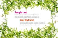 Bambusgrün lässt Rahmen Lizenzfreie Stockbilder