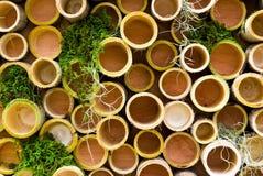 Bambushintergrund Stockfoto