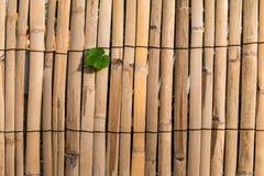 Bambushintergrund mit Blatt Stockbilder